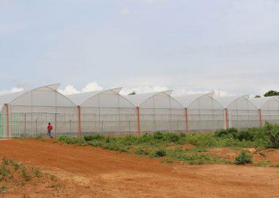 Green-House-Farming-(Osara---Kogi-State)